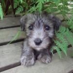 Rosa's puppy Armas
