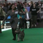 Rosa in the ring at Crufts 2012