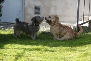 Hertta and Milo 1